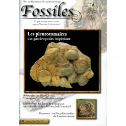 Fossiles N°13
