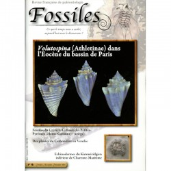 Fossiles N°16