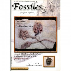 Fossiles N°7