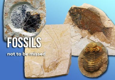 Fossils not to be missed