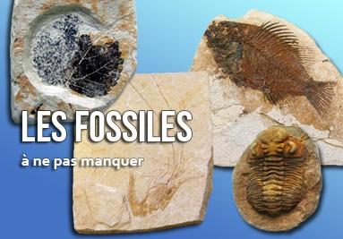 Les Fossiles à ne pas manquer